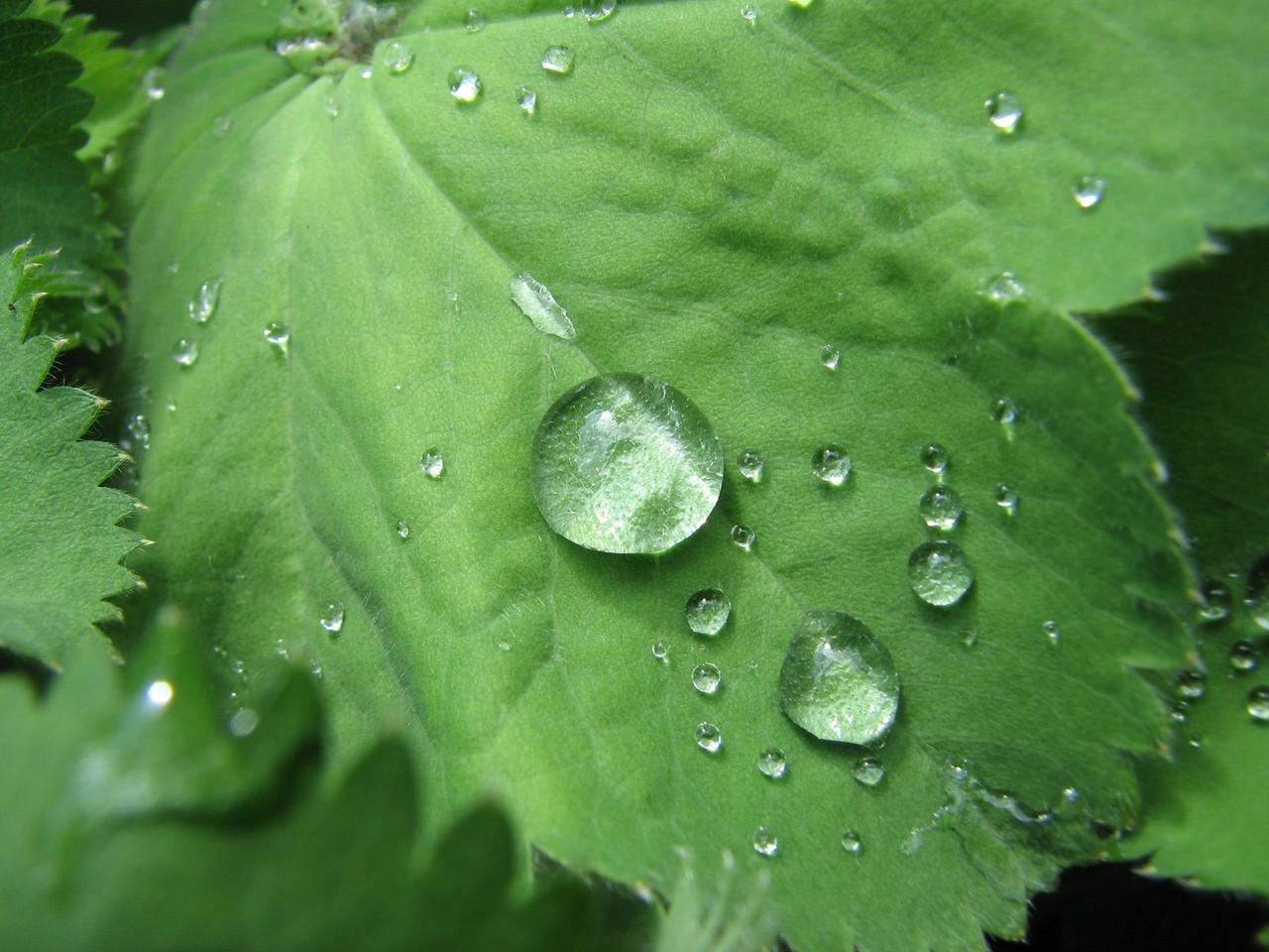Pozytywne i negatywne aspekty medycyny naturalnej